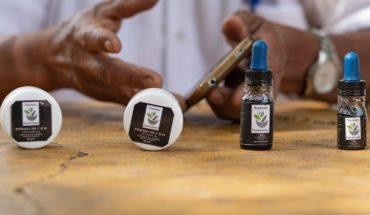 Campesinos de Guerrero cambian cultivo de amapola por el de mariguana
