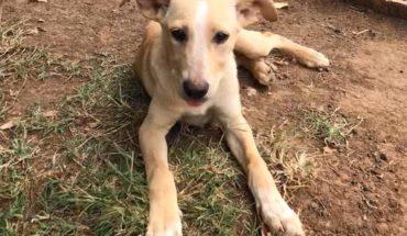 Centro de Atención Animal ofrece servicios para el bienestar canino y felino