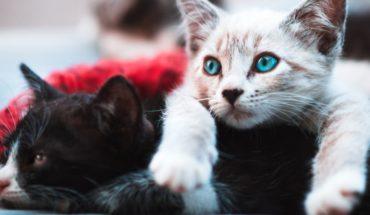 En el Día Internacional del Gato, cinco preguntas (y respuestas) sobre ellos