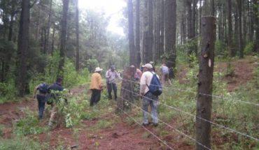 Las reformas que necesita México para impulsar el desarrollo forestal