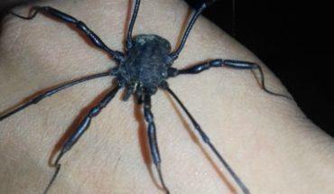 Caveman Arachnid is found in Mendoza