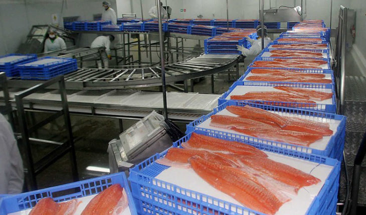 """Director of Sernapesca and salmon ban in Russia: """"There is probably protectionism"""""""
