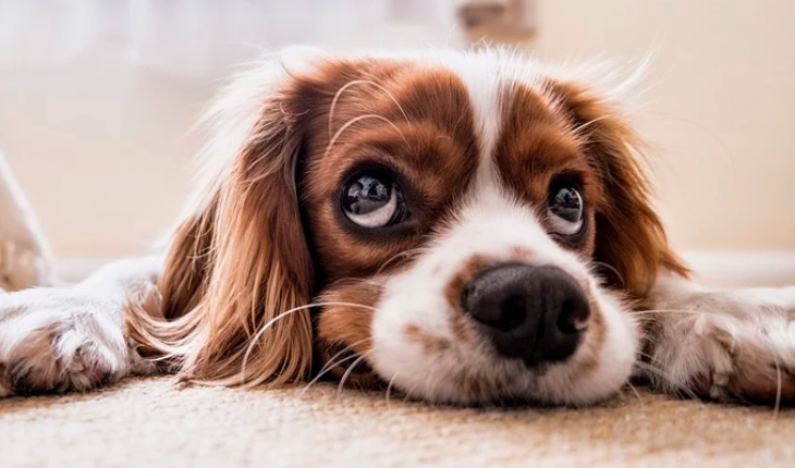 Good and bad food brands you could feed your dog with