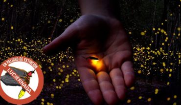 Massive expansion of light pollution puts fireflies in threat of extinction