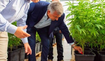 """Morales: """"We will manufacture Argentina's first medicinal cannabis oil"""""""
