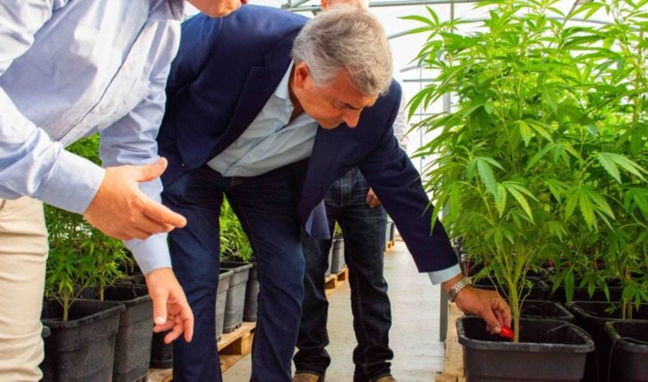 "Morales: ""We will manufacture Argentina's first medicinal cannabis oil"""