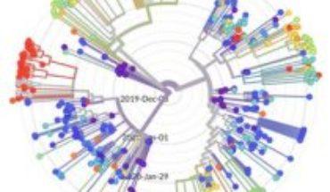 ¿De qué sirve secuenciar el coronavirus?