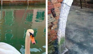 Coronavirus: Agua de Venecia luce limpia y cristalina porque no hay turistas