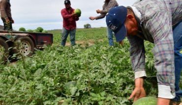 El clima no ayudo a los primeros cultivos de sandía