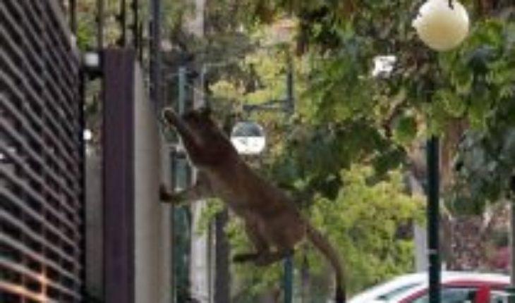 Tour urbano: animales recorren ciudades mientras las personas se refugian en sus hogares