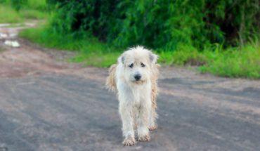 Un perrito esperó en el mismo lugar durante 4 años para volver a ver a sus dueños