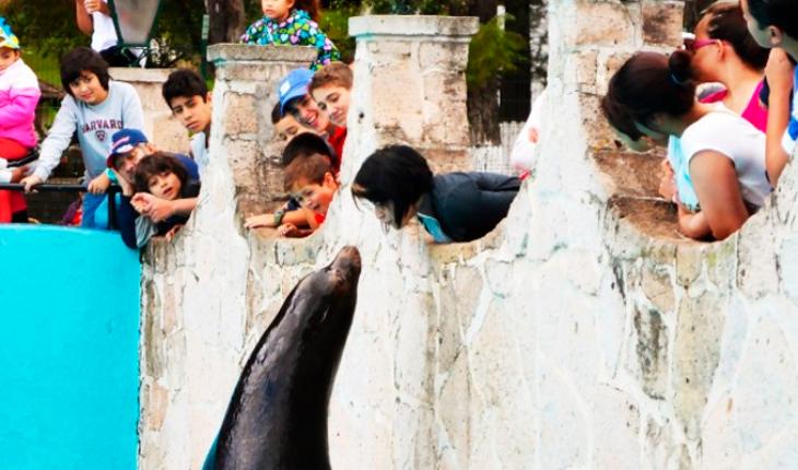 Morelia Zoo prioritizes visitor and wildlife health