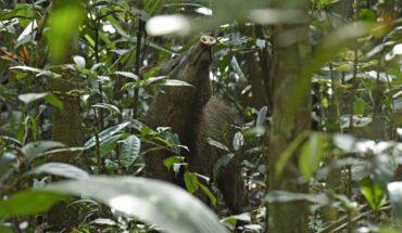 ¿Por qué la deforestación abre la puerta a nuevas enfermedades?