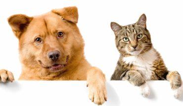 Coronavirus: ¿Pueden contagiarse las mascotas?
