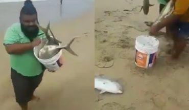 Inesperadamente, playas de Acapulco se llenan de grandes peces vivos (Video)