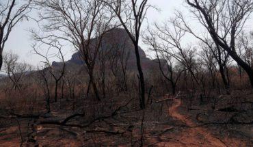 La deforestación en la Amazonía brasileña se dispara más de un 50 por ciento en plena pandemia de coronavirus