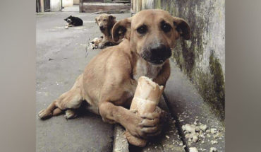 Ministry of Agriculture in China declares that dogs will already be part of its menu