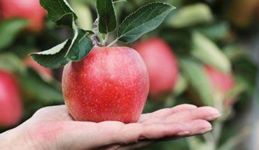 Como en Copenhague: quieren plantar árboles frutales en las calles de Viedma