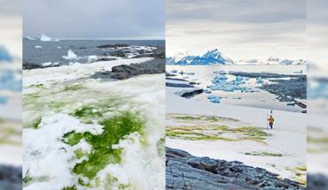 Crisis climática está vistiendo de verde a la Antártida