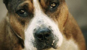 Joven es asesinado por su perro pitbull en Coahuila