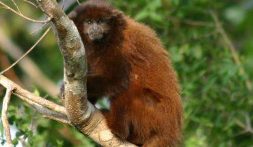 La carrera por salvar especies amenazadas en tiempos de COVID-19