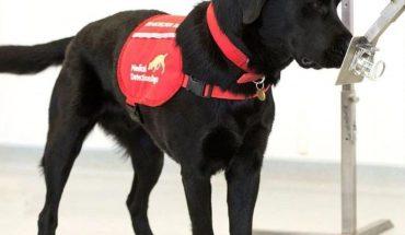 Perros entrenados podrían detectar Covid-19 en Humanos