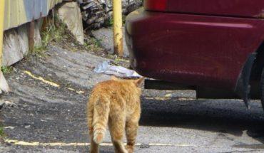 Perros y gatos sufren abandono en Colombia durante cuarentena por COVID-19