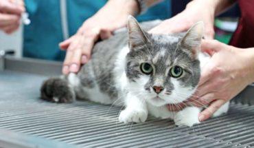 Recomiendan a personas contagiadas con Covid-19 limitar su contacto con los gatos