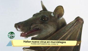 Hallan nuevo virus en murciélagos   La Bola del 6