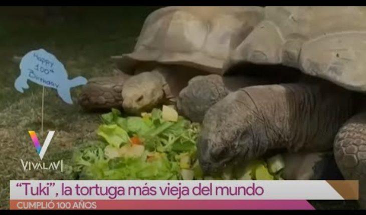 La tortuga más vieja del mundo tiene 100 años | Vivalavi