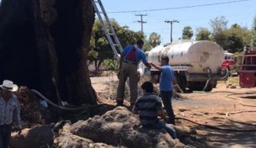 Investigation of vandalism by huanacaxtle fire in Mocorito