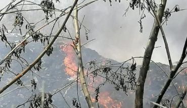 Irapuato calls for reporting tree felling and burning