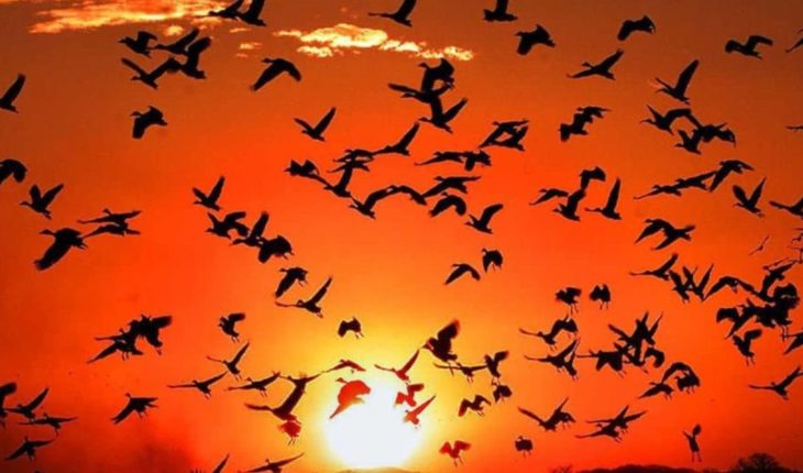 World Day of Migratory Birds: Know Your Risks