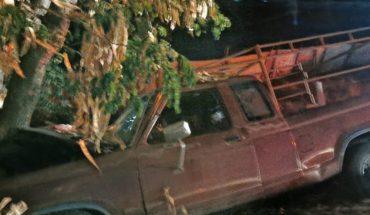 Auto sale del camino y choca contra árbol en Aguaruto