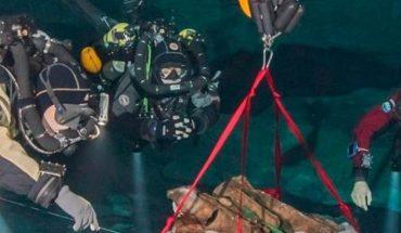 Descubren dos especies animales nuevas en Quintana Roo