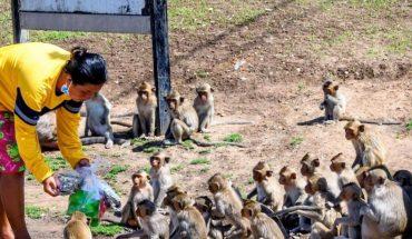 Miles de monos invaden ciudad en Tailandia