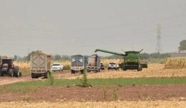 AARFS continúa registro para trámite de incentivo de maíz