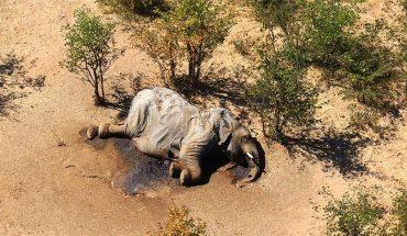 Consternación causa misteriosa muerte de más de 360 elefantes en Botswana