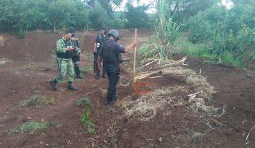 Cuerpo semienterrado fue encontrado en huerta frutal de La Resolana en Cotija, Michoacán