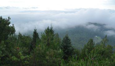 El oasis forestal purépecha que surgió de las cenizas del volcán Paricutín