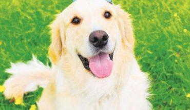 Fin del mito: estudio dice que un año de perros no equivale a 7 de humanos