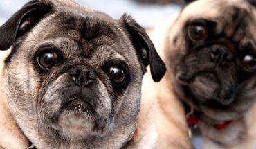 Investigadores establecen una nueva forma de calcular la edad de un perro