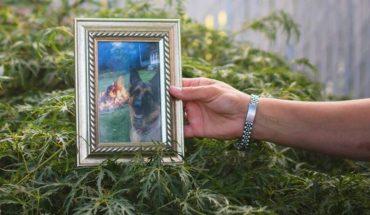 Murió Buddy, el primer perro que contrajo coronavirus en Estados Unidos