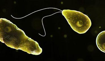 Una rara ameba que destruye el tejido cerebral infectó a una persona en Florida
