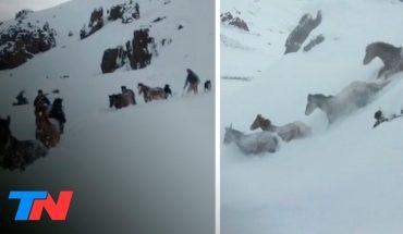 Hazaña en plena Cordillera: la impactante odisea de 4 gauchos patagónicos para rescatar una tropilla