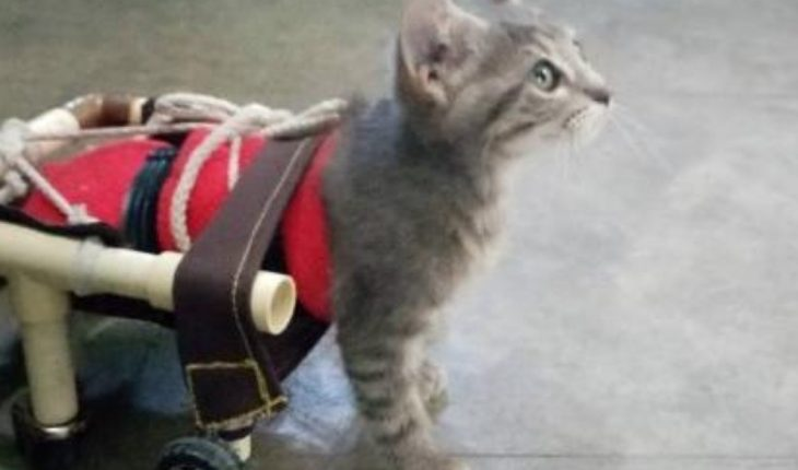 Meet the kitten who stopped walking after a brutal dog attack