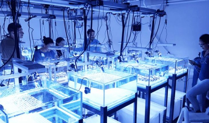 Mexico first achieves sexual reproduction of corals in laboratory
