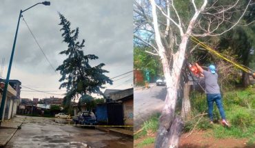 Morelia City Council continues with removal of fallen branches and trees