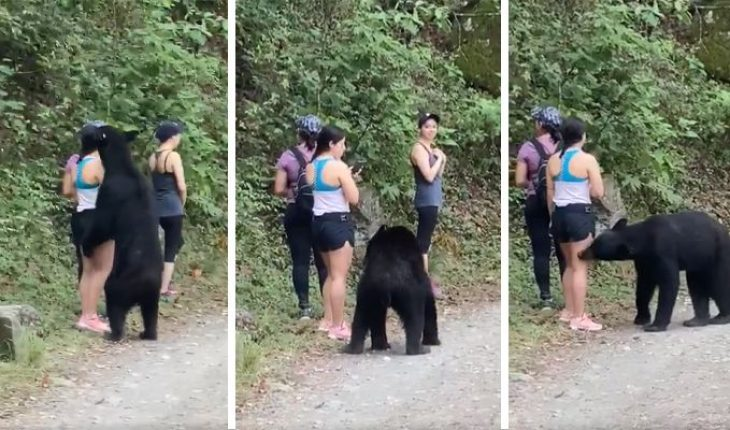 Remember the young lady who took a selfie with a bear? we show you the selfie (Video)