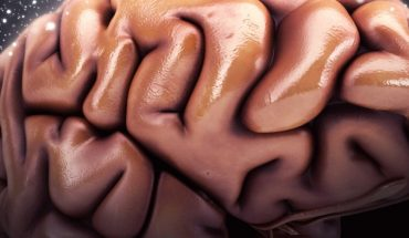 World Brain Day: Tips to Keep You Young
